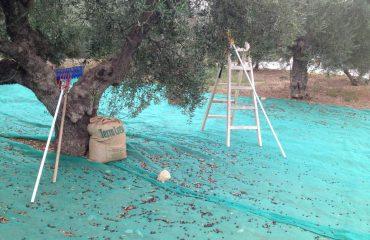Premium Safari Tour - The Secrets of Cretan Wine and Olive Oil (10)