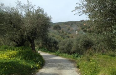 Premium Safari Tour - The Secrets of Cretan Wine and Olive Oil (21)