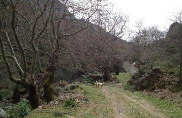 Premium Safari Tour - The Secrets of Cretan Wine and Olive Oil (25)