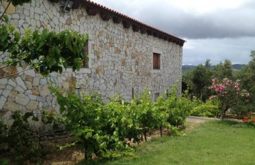 Premium Safari Tour - The Secrets of Cretan Wine and Olive Oil (5)