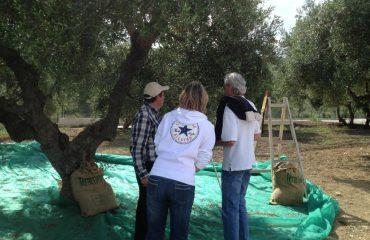 Premium Safari Tour - The Secrets of Cretan Wine and Olive Oil (8)