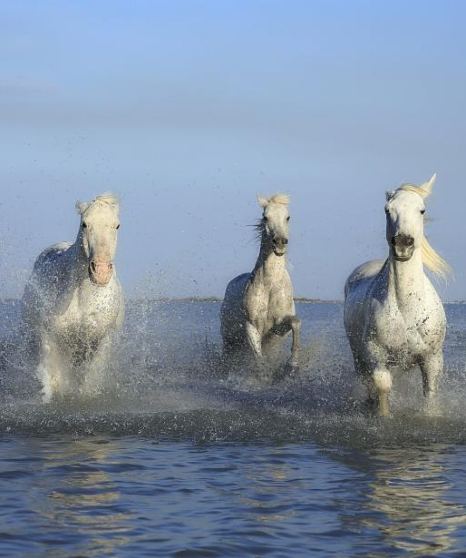 horse-Horse riding tours in Chania